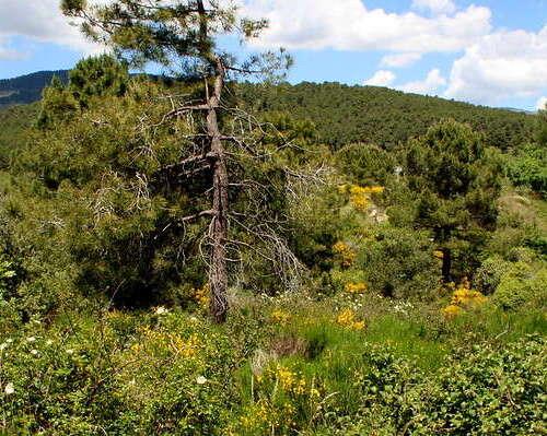 Sierra de Guadarrama - manuel m. v. - https://www.flickr.com/photos/martius/